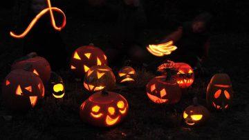 Halloween v botanicu - Blog botanicus.cz